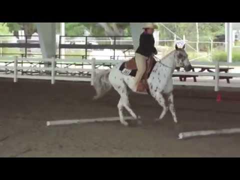 Appaloosa Horse Show Event ( Part-11 )