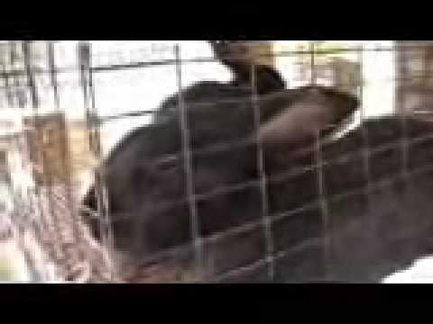 Rabbit Raising Part 2, survivalist, homesteading food storage