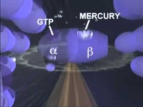 Just How Toxic is Mercury? - A Study by University of Calgary