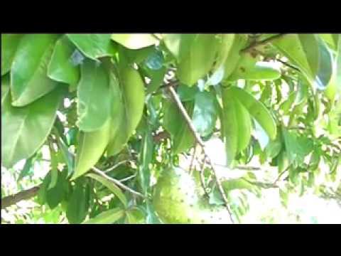 cancer healing tree