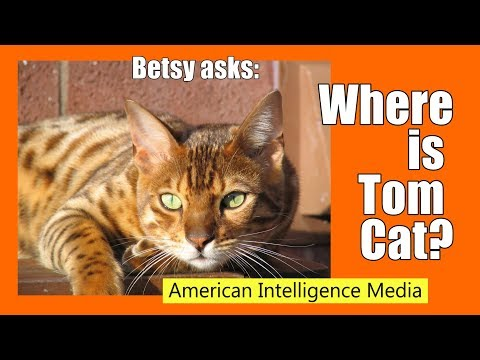 Where is Tom Cat - Betsy Asks