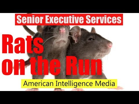 SES rats on the run