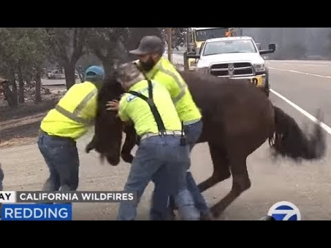 "CA Fires - Chaos, Terror, Rescues, Death - ""Never Seen Anything Like It,"" except Last Year"