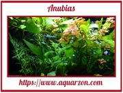Looking at aquarium plants Told through An experienced