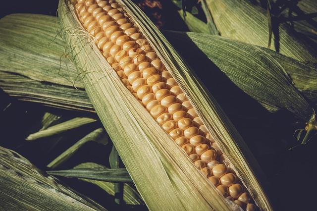 Uptake of hermetic grain bags can reduce post-harvest losses