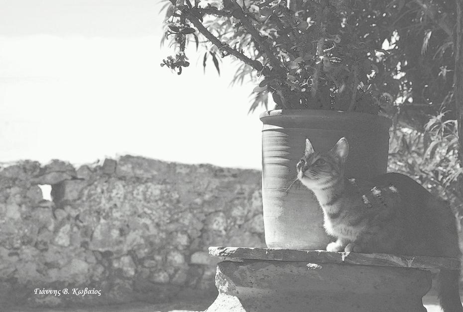 Οἱ Γάτες τ᾿ Ἅι-Νικόλα