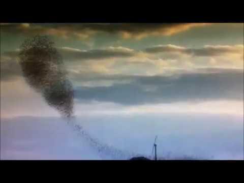 Flock of Swirling Birds   remix  A D Eker 2019