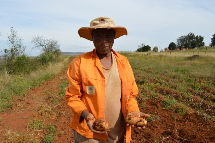 Small-scale farmer support programme gives rural farmers a second chance