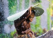 Orangutan in the rain with taro leaf umbrella.