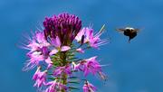 RM bee plant