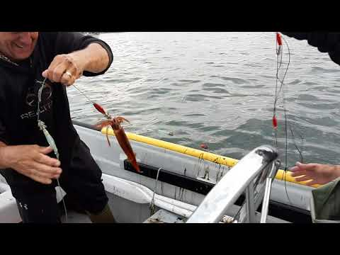 Squid Jigging in Newfoundland with Totally Outdoors NL 2