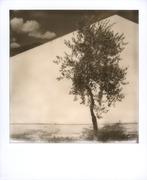 DE RERUM NATURA (La solitudine del giovane ulivo)