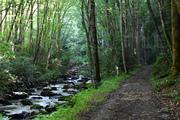 Bradley Fork Trail 8-8-19