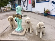 Area  51 Woffs, Eloise, Walter & Wilbur