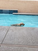 Beau loves the new pool