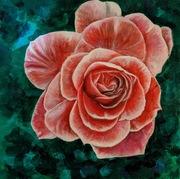 2019-29 Chinese Rose