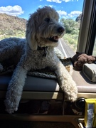 Walter in his favorite spot on the road trip