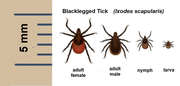 Keep an eye open for ticks.