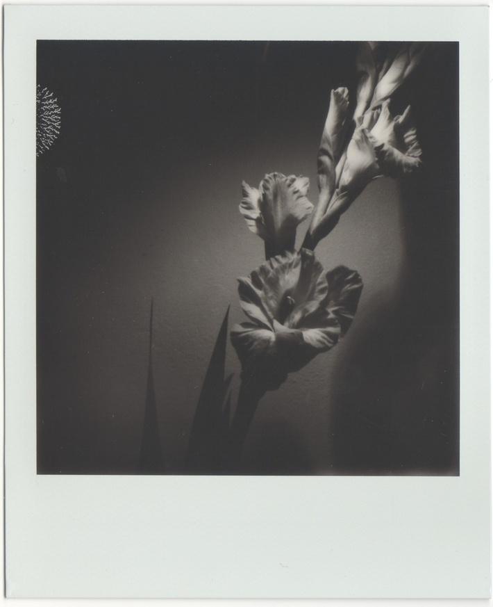 Natura morta - Gladiolo