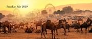 pushkar camel fair (3)