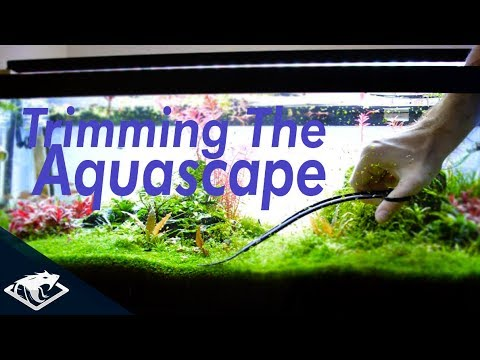 Trimming the Aquascape