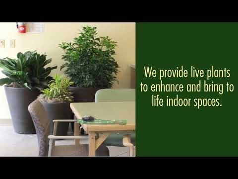 Indoor Plants For Office, Reception Areas & Board Rooms in PA(610.329.3935)