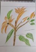 orange flower with leaves