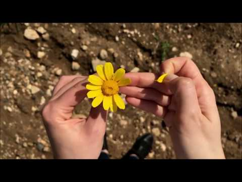 The Last Living Flower  - Einar & Veronica