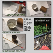 Using a toilet roll as a seed cell