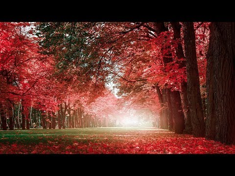 30 Minutes of Beautiful Romantic Music: Guitar Music, Violin Music, Cello Music, Piano Music ★74