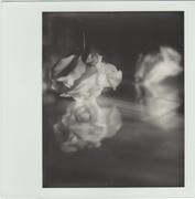 Natura morta - fiore (hit the ground)