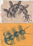 Fantastic Bugs from Adam R!