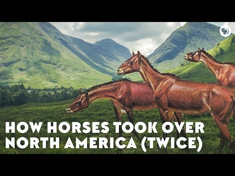 How Horses Took Over North America (Twice)