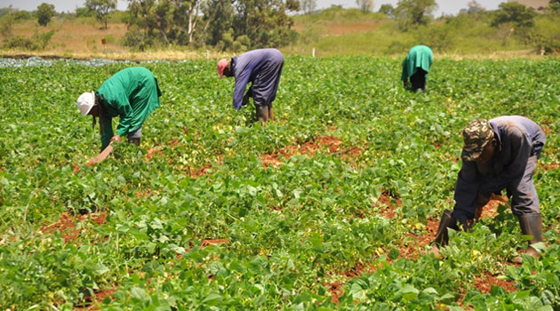 Small African businesses now driving growth in Agriculture