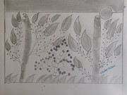 pencle  sketch with leaves with dark dots
