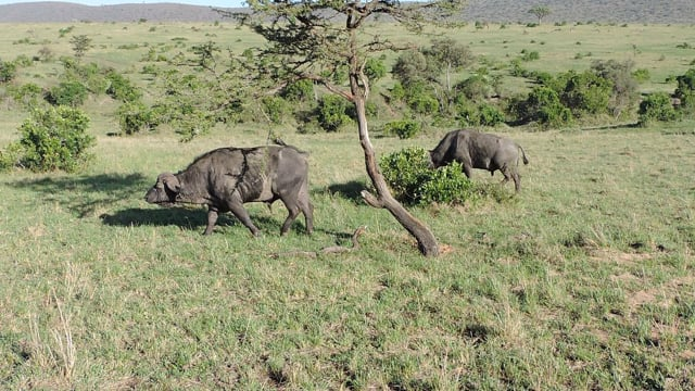 Kenya Adventure Safaris/ Adventure Travel Holidays.