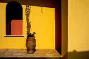 Κόκκινα λουλούδια σε κίτρινο τοίχο