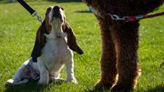 Doggie Dash Puppy