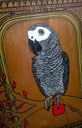 Grey Parrot Loui