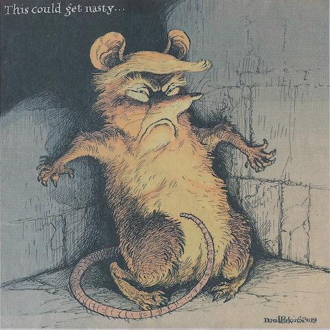 Cornered rat