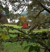 View across Quamichan