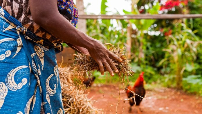 Advancing sustainable agriculture in Ghana