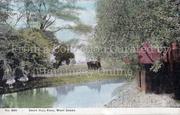 Downhills Park c1905