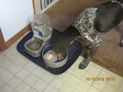 Mia's Kitty Cat Supper