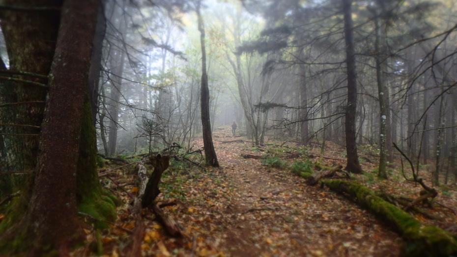 Mount Sterling Ridge Trail in the fog