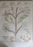 flower withlot of leaves1
