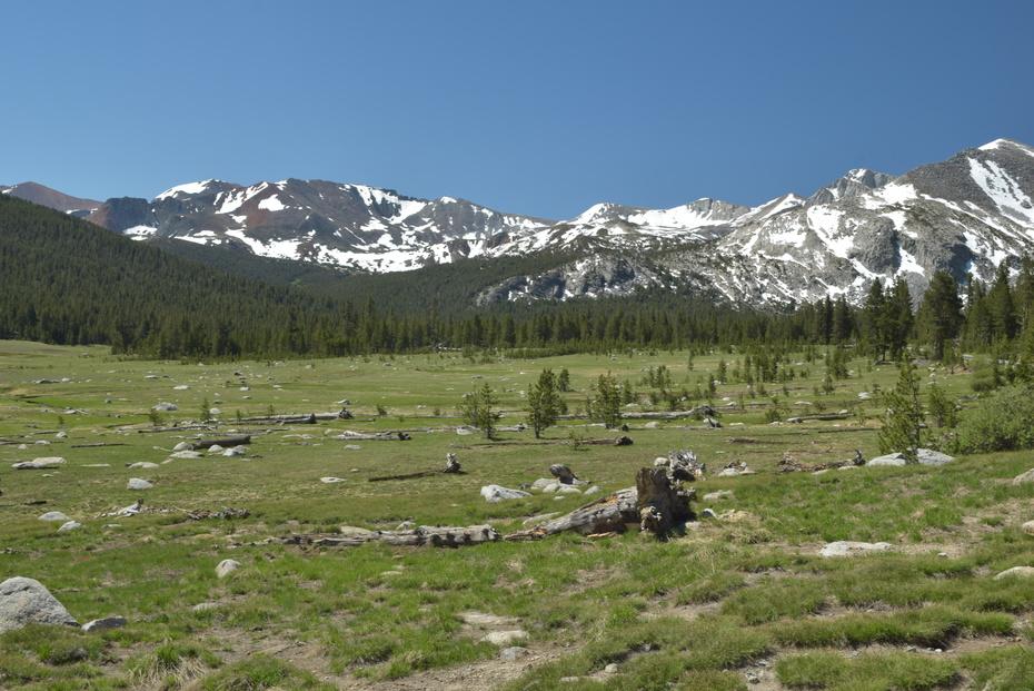 Dana Meadows, Yosemite