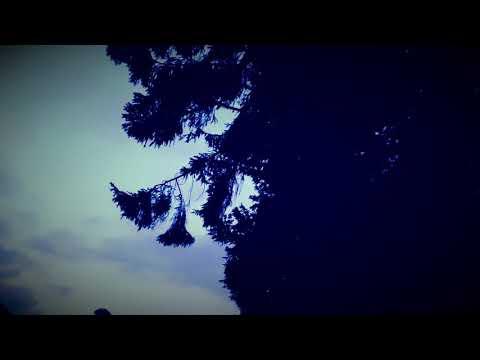 Frédéric HALBREICH - La liberté la vie la mort
