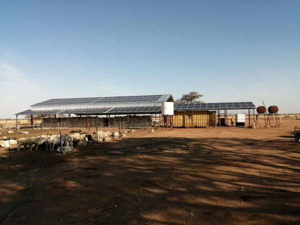 Drought-stricken farmers harness solar power to produce livestock feed from the bush