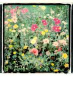 I fiori contano